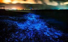 Tận hưởng màn đêm lung linh huyền ảo và vẻ đẹp kỳ ảo của tự nhiên bên bãi biển phát sáng Maldives