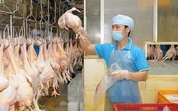 Việt Nam sắp xuất khẩu lô gà chính ngạch đầu tiên sang Nhật