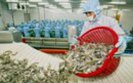 Mục tiêu xuất khẩu tôm 10 tỷ USD: Tổ chức sản xuất lớn, chuyên nghiệp