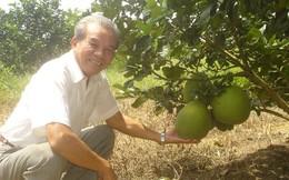 Rau quả vào Top 4 mặt hàng nông lâm sản chủ lực