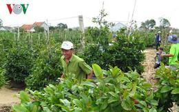 Hoa cây cảnh được mùa, Tết này nhiều hộ ở Phú Yên thu hàng trăm triệu