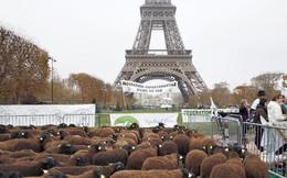 Nông nghiệp Pháp đi lên con đường cường quốc từ nền tảng manh mún như thế nào?