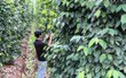 Bộ trưởng Bộ Nông nghiệp lo tiêu phát triển thần tốc