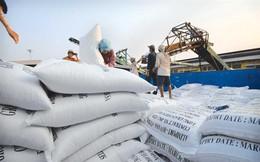 Đầu năm xuất khẩu gạo đã tăng đột biến