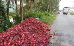 Vứt bỏ hàng trăm tấn thanh long: Hậu quả việc trồng theo phong trào