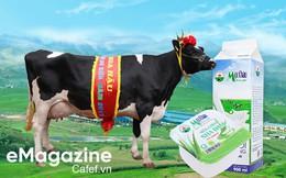 Hoa hậu Bò sữa Mộc Châu – 15 năm vinh danh những người làm Nghề chăn nuôi bò sữa