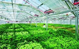 TP.HCM nói gì về các sai phạm liên quan đến đất đai tại Tổng công ty Nông nghiệp Sài Gòn?