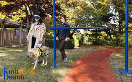 Ngôi trường dạy chó độc đáo nhất thế giới có gì đặc biệt?