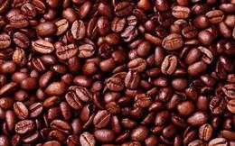 Giá cà phê được dự báo sẽ tăng hơn nữa