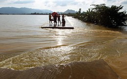 Vỡ đê bao, hàng trăm héc ta cây ăn trái chìm trong nước