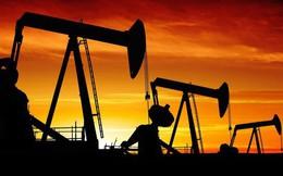"""Nga cảnh báo OPEC không """"vội vàng thay đổi chính sách"""" vì biến động giá dầu"""