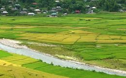 Thủ tướng đồng ý chuyển hơn 400ha đất trồng lúa sang đất phi nông nghiệp