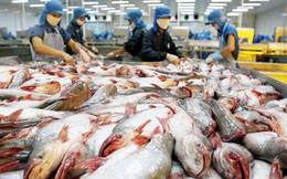 Xuất khẩu cá tra sang Brazil giảm mạnh
