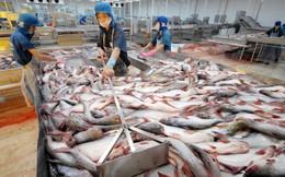 Xuất khẩu cá tra sang Brazil chưa thấy dấu hiệu phục hồi