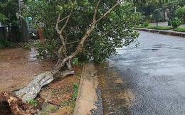 Bão số 9 giật cấp 12 đang mưa lớn ở đảo Phú Quý, Cần Giờ nhiều cây xanh bật gốc