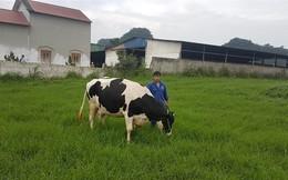 Việt Nam chuẩn bị xuất khẩu sữa sang Trung Quốc