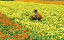 """Chùm ảnh: Đắm đuối giữa vựa hoa nổi tiếng nhất vùng đất """"Chín Rồng"""""""