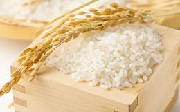 Philippines công bố mời thầu quốc tế 500.000 tấn gạo trắng