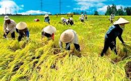 Lộc Trời (LTG) bắt tay đối tác Dubai mở rộng hơn 10.000 ha canh tác lúa gạo