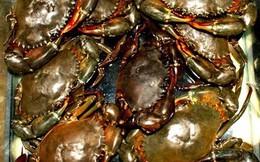 Giá cua biển tăng mạnh