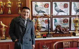 Chơi chim bồ câu, thú vui mới của người giàu Trung Quốc?