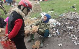 Chợ chó con ở Nghệ An đông vui nhộn nhịp vào ngày 29 Tết