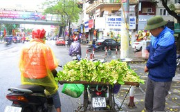 Hoa bưởi đầu mùa, giá tới 300.000 đồng/kg vẫn hút khách Hà Nội