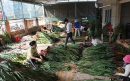 Chất lượng vượt trội, người trồng hoa tết Đà Lạt lãi lớn