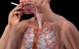 """Cơ thể sẽ """"phản ứng"""" ra sao khi bạn dừng hút thuốc lá?"""