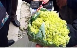 Sản xuất rau an toàn cho thu nhập cao gấp 7 lần trồng lúa