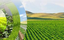 NSC dự kiến chào mua 3,4 triệu cổ phần Giống cây trồng Miền Nam với giá 70.000 đồng/cp