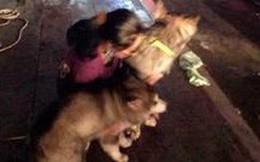 Vụ cháy chung cư Carina: 'Thoát chết nhờ chú chó thông minh'