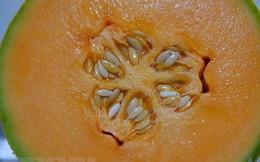 Australia: 3 người tử vong vì nhiễm khuẩn Listeria do ăn dưa lưới