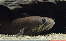 Chuyện của 3 con cá: Đọc và ngẫm, nhiều người trong chúng ta sẽ thấy ngậm ngùi