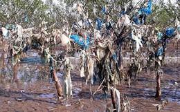 Ảnh: Kinh hoàng rừng cây treo đầy rác ở Thanh Hoá