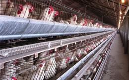 Hơn 200 triệu quả trứng nghi nhiễm khuẩn bị cấp tập thu hồi tại Mỹ