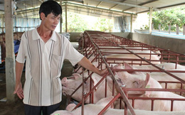 """Giá lợn hơi bất ngờ tăng vọt lên 40.000 đồng/kg: Người chăn nuôi cần """"bình tĩnh"""""""