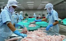 """Xuất khẩu cá tra sang Mỹ gặp khó, các thị trường khác """"cứu nguy"""" ngay"""