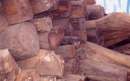 Bắt giữ xe tải chở hơn 2.000 kg gỗ trắc không rõ nguồn gốc