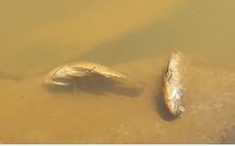 Nước sông Cu Đê lại chuyển màu đỏ do ô nhiễm