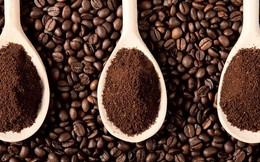 Mỹ rời khỏi ICO, giá cà phê trong nước lấy lại mốc 37 triệu đồng/tấn