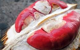"""Sầu riêng ruột đỏ như gấc giá 1 triệu đồng/cây vẫn """"cháy hàng"""""""