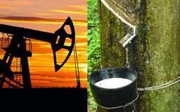 Thị trường cao su thiên nhiên sẽ hưởng lợi nhờ giá dầu tăng