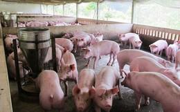 """Ngân hàng đã """"gỡ khó"""" cho người nuôi lợn thế nào?"""