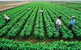 200 tỷ đồng cho khởi nghiệp nông nghiệp, nông thôn