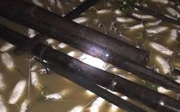 Khu vực cá bè chết hàng loạt trên sông La Ngà có khí độc vượt chuẩn