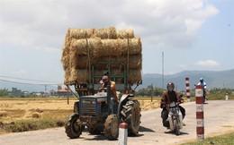 Giá tăng cao, 1 sào rơm = 80kg lúa!