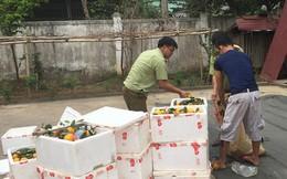 Nghệ An: Thu giữ 200 kg cam lá nhập lậu