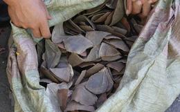 Bắt giữ hàng tấn vảy tê tê được nhập khẩu từ Congo