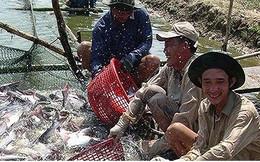 """Thủy sản Việt Nam nỗ lực gỡ """"thẻ vàng"""" của EU"""